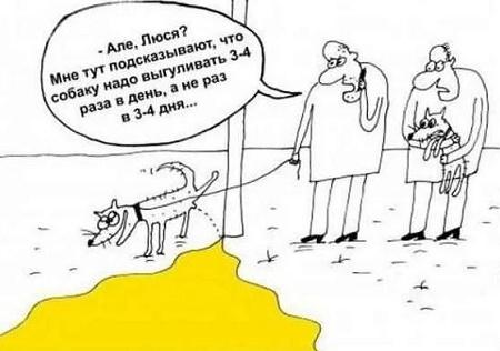 самый свежий анекдот про собак