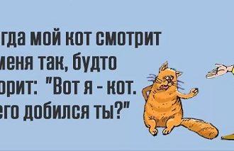 самый угарный анекдот про котов