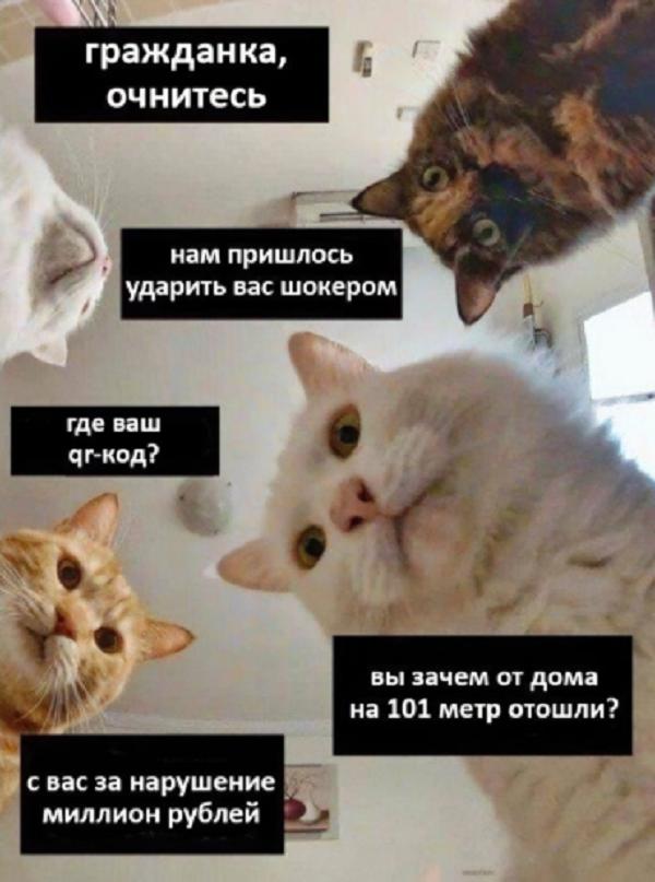 анекдоты про карантин АН асв